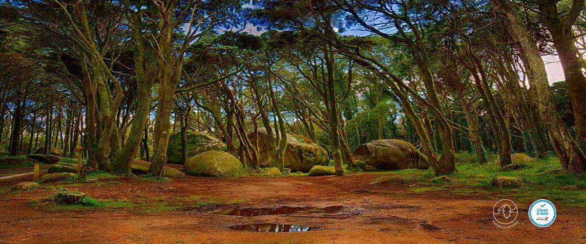 Caminhada Bosques Encantados da Serra de Sintra